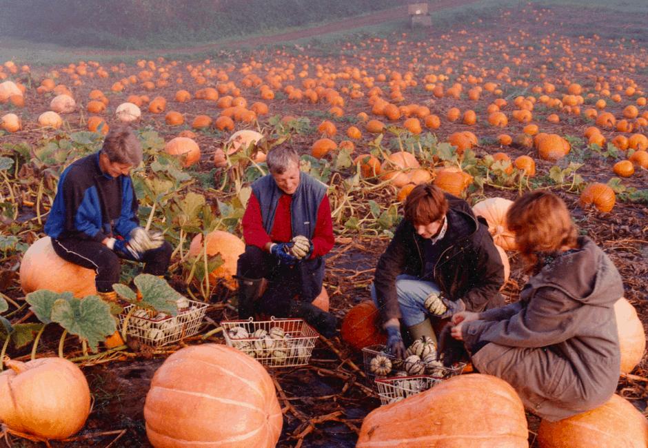 Autumn 1992 in the Pumpkin Fields