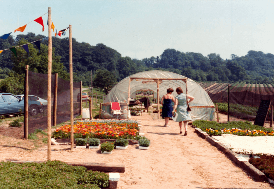 Selling bedding plants before the glasshouse was built, in 1984.