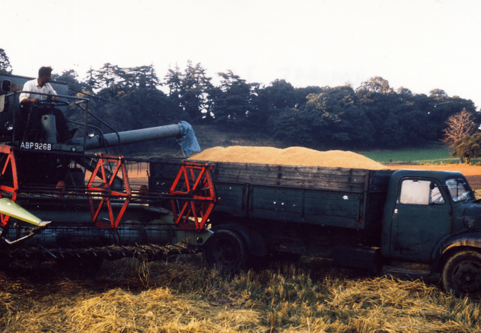 Alan Turner unloading the grain into an old Bedford lorry