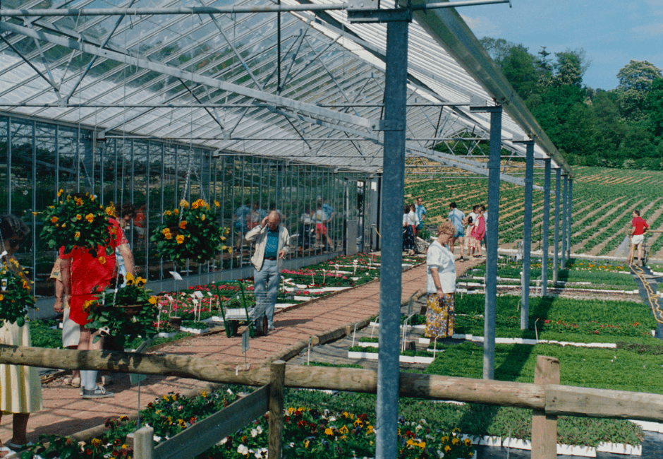 A view of the greenhouse in 1990s, with strawberry fields in the background.