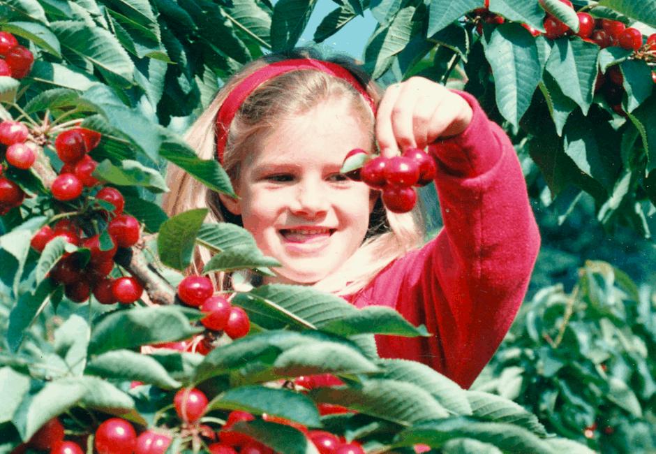 Grandaughter of John and Wendy Shinner, Lara, enjoying the cherries.