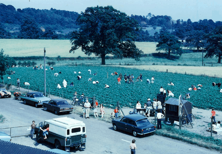 Sandy Lane in 1971. This view would now show the Nursery on the left and in the middle in the distance, Hungerford Lake.