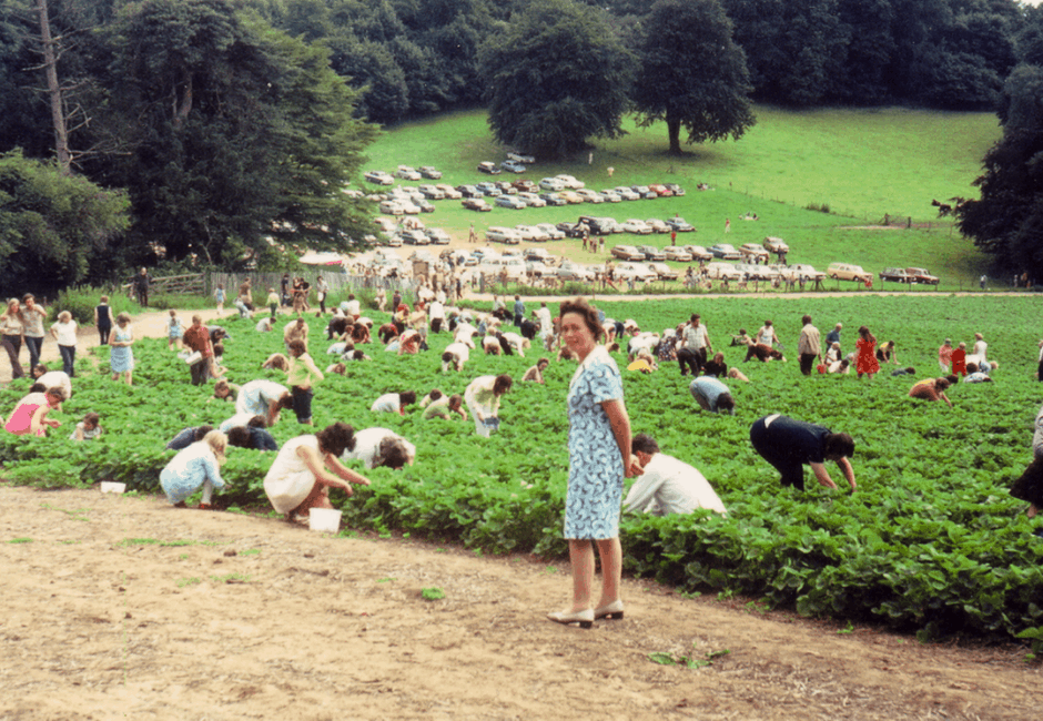 Pick-Your-Own in 1974