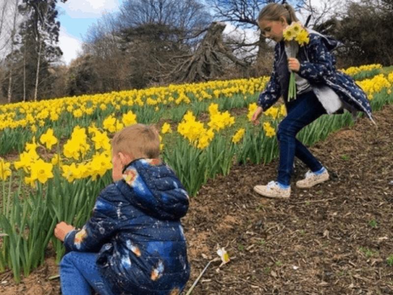 Daffodil picking at Priory Farm