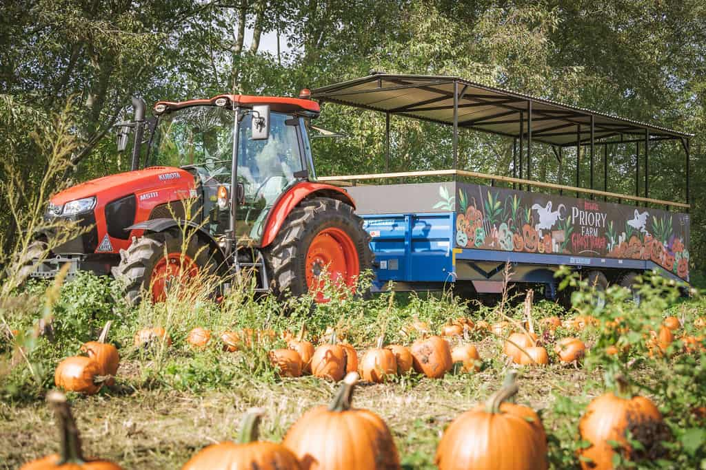Pick Your Own Pumpkins for Halloween at Priory Farm