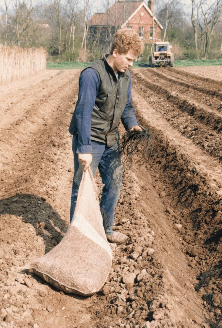 Nic Shinner planting asparagus in 1987.