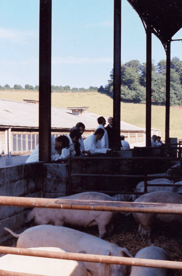 Young, female pigs for sale in the barn beside what is now the Farm Shop car park.